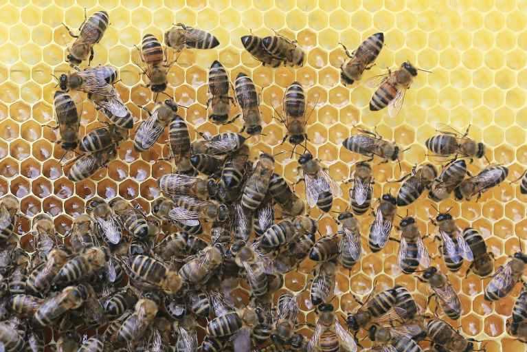 Hive.jpeg